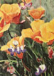 California Poppies Notecard